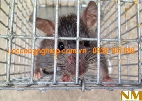 Lưới chống chuột hcm