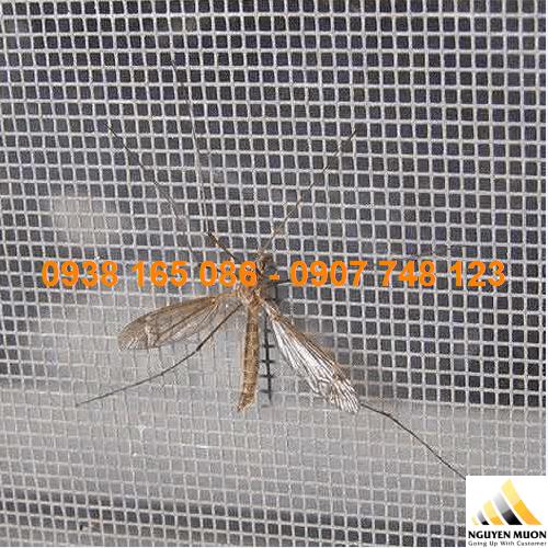 lưới inox 304 chống muỗi hcm